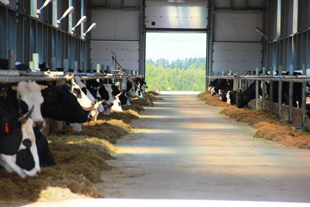 гуанчжоу это фото молочно товарной фермы вам